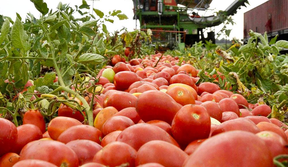 viomixaniki-tomata-poiotita
